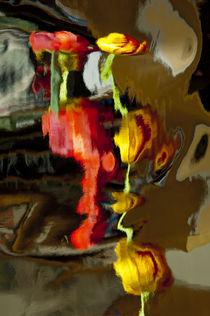 20050430-tg-0104-edit