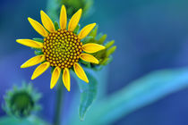 Yellow on Blue by Richard Susanto