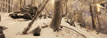 Winterwald 3 von Intensivelight Panorama-Edition