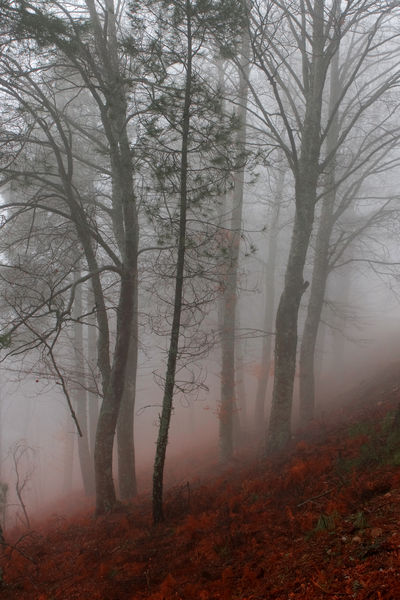 An-autumn-morning