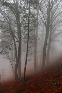 An autumn morning