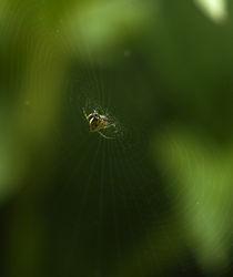 spider web von emanuele molinari