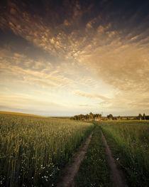 Russian field by Alex Gvozditskiy