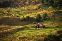 Life on the hills von Alex Gvozditskiy