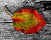 Leaf of barnwood von © Joe  Beasley