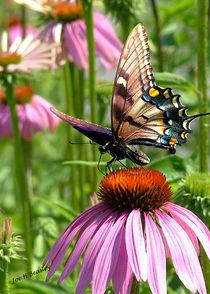Papillon-sur-la-fleur