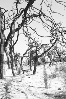 Agcaniglia-paesaggi-02
