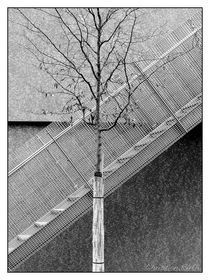 Diagonal by Chris Rüfli Photography