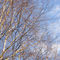 Drzewaprint