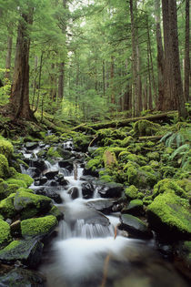 Olympic National Park, Creek in Forest by Wolfgang Kaehler