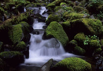 Olympic National Park, Creek with mossy Rocks by Wolfgang Kaehler