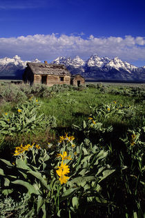 Grand Teton Mountains with Homestead von Wolfgang Kaehler