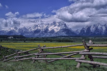 Grand Teton Mountains with Dandelions and Fence von Wolfgang Kaehler