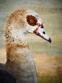 Strange Goose #2 by Eye in Hand Gallery