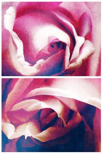 Spring - Blue Moon Roses von Sybille Sterk