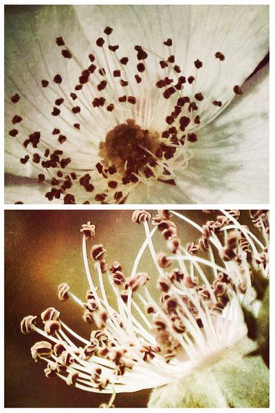 Spring-wildrosehearts-c-sybillesterk
