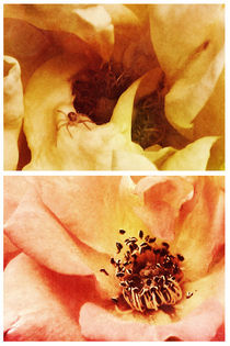 Spring - Roses - Yellow and Pink von Sybille Sterk