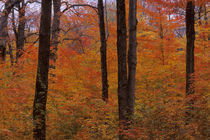 Fall in the Laurentians by Wolfgang Kaehler
