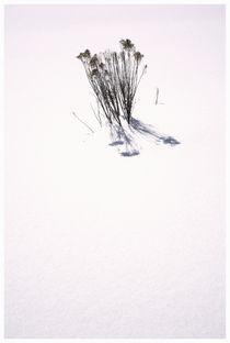 Artflakes-prints-14