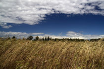 Wheat by Alessandro Caniglia