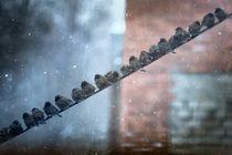 Birds von Oksana Islamova