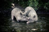 Hof Butenland: Schweineglück. von Thomas Schaefer