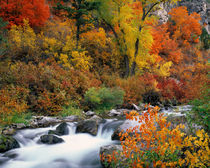 Palisades Creek in Autumn von Leland Howard