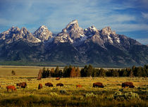 Buffalo Wild by Leland Howard
