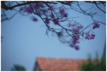 Purple Blossom von Bryony Shearmur