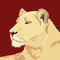 Lioness von sebastiano ranchetti