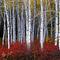 Dt6221-aspens-autumn-wasatch