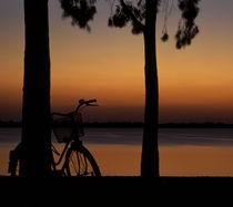 Bicycle by George Kavallierakis