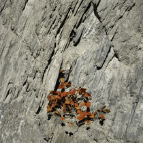 Plant growing in rock by George Kavallierakis