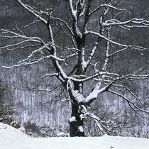 Tree by George Kavallierakis