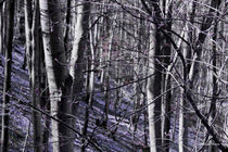 Purple Forest von Milena Ilieva