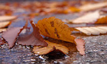 Autumn leaves in the street by Radu Razvan