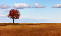 Autumn solitude von Radu Razvan