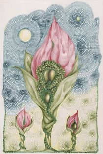 Floribunda Amamaus by Helena Wilsen - Saunders