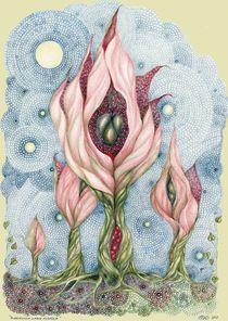 Floribunda Labia Rosacea by Helena Wilsen - Saunders