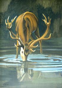 Deer Stag Drinking von Patricia Howitt