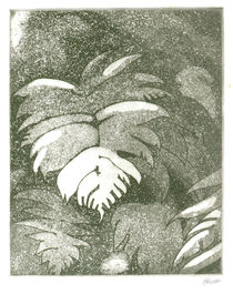 Black Mamaku Tree Fern Etching by Patricia Howitt
