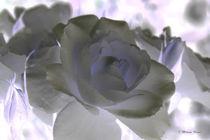 Rose-art