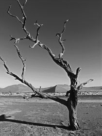 dead tree sossusvlei by james smit