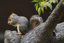 Squirrel in Newport Beach, California by Eye in Hand Gallery