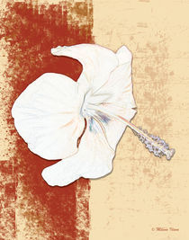 White flower by Milena Ilieva