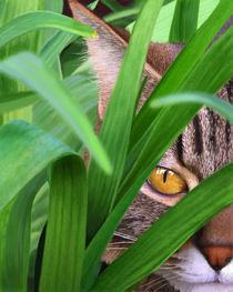 Jungle Cat von Bob Nolin