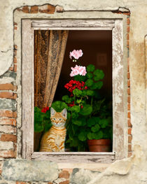 Little Tuscan Tiger by Bob Nolin