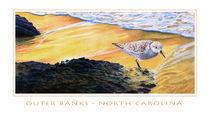 Outer Banks Sanderling von Bob Nolin