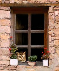 Tuscan Kitten in the Window by Bob Nolin