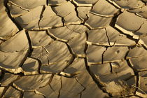 Fissured soil by Tomer Burmad